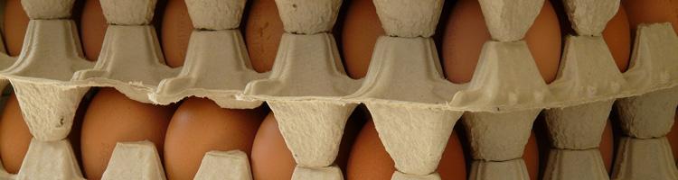 Bewusster einkaufen! Was der Eier-Skandal uns lehrt